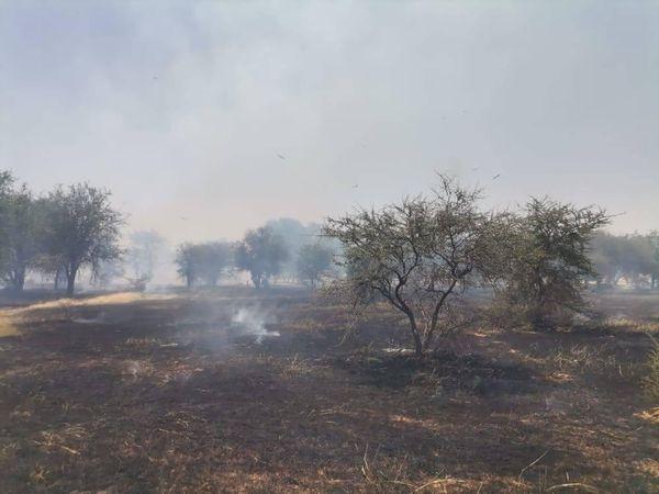 Tahoua: plus de 100.000 hectares ravagés par des feux de brousse à Abalak